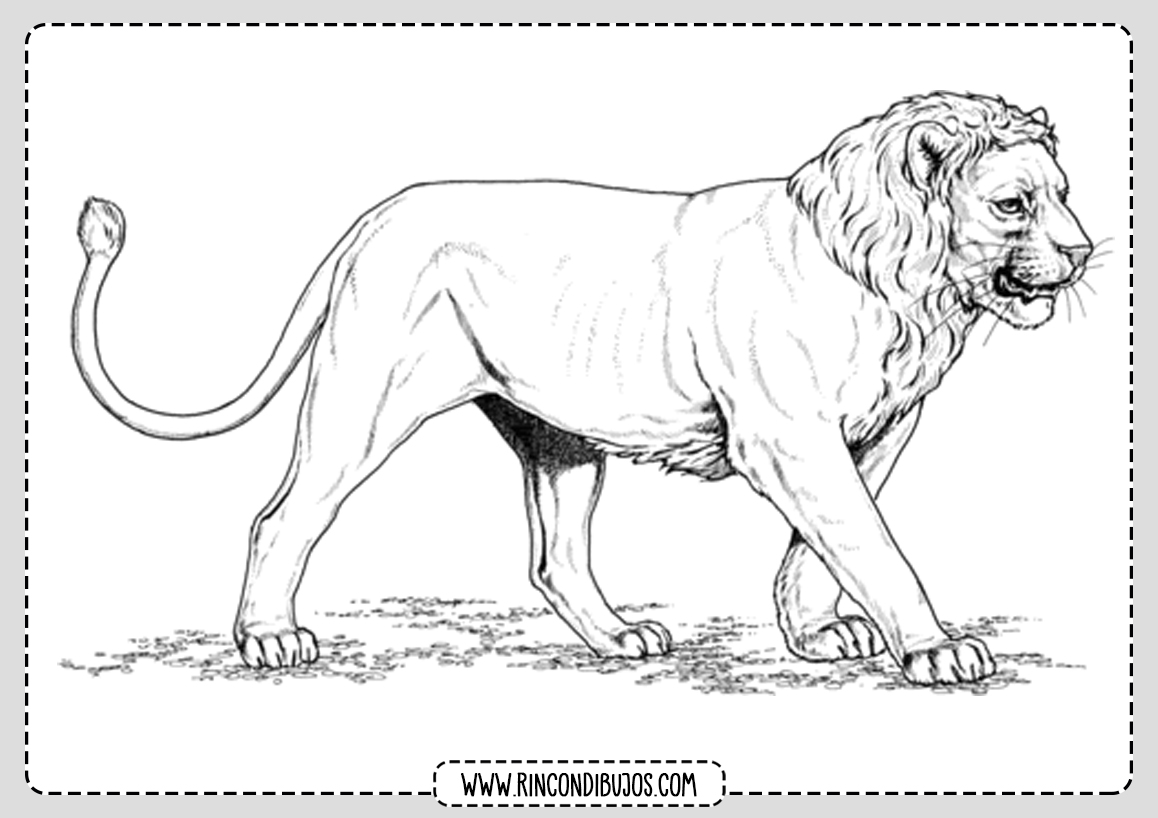 Dibujos de Leones para colorear