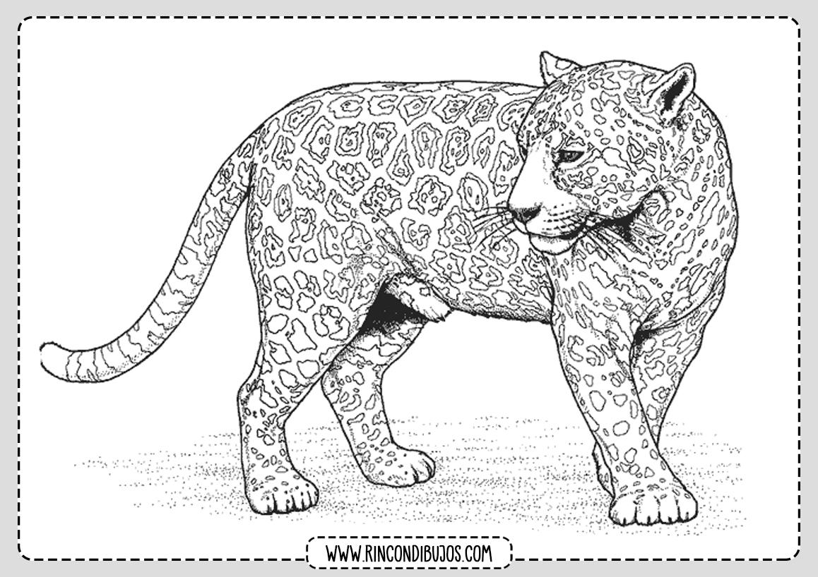 Dibujos de Leopardos para Pintar