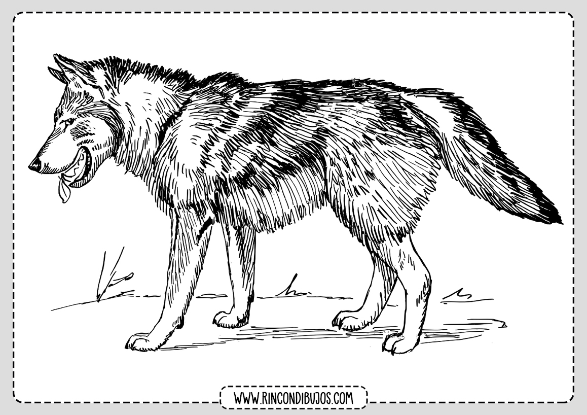 Dibujos de Lobos Faciles para colorear