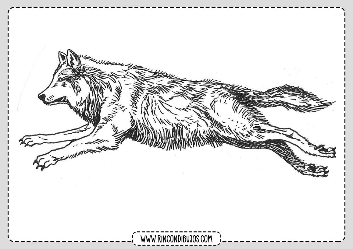 Dibujos de Lobos Naturaleza
