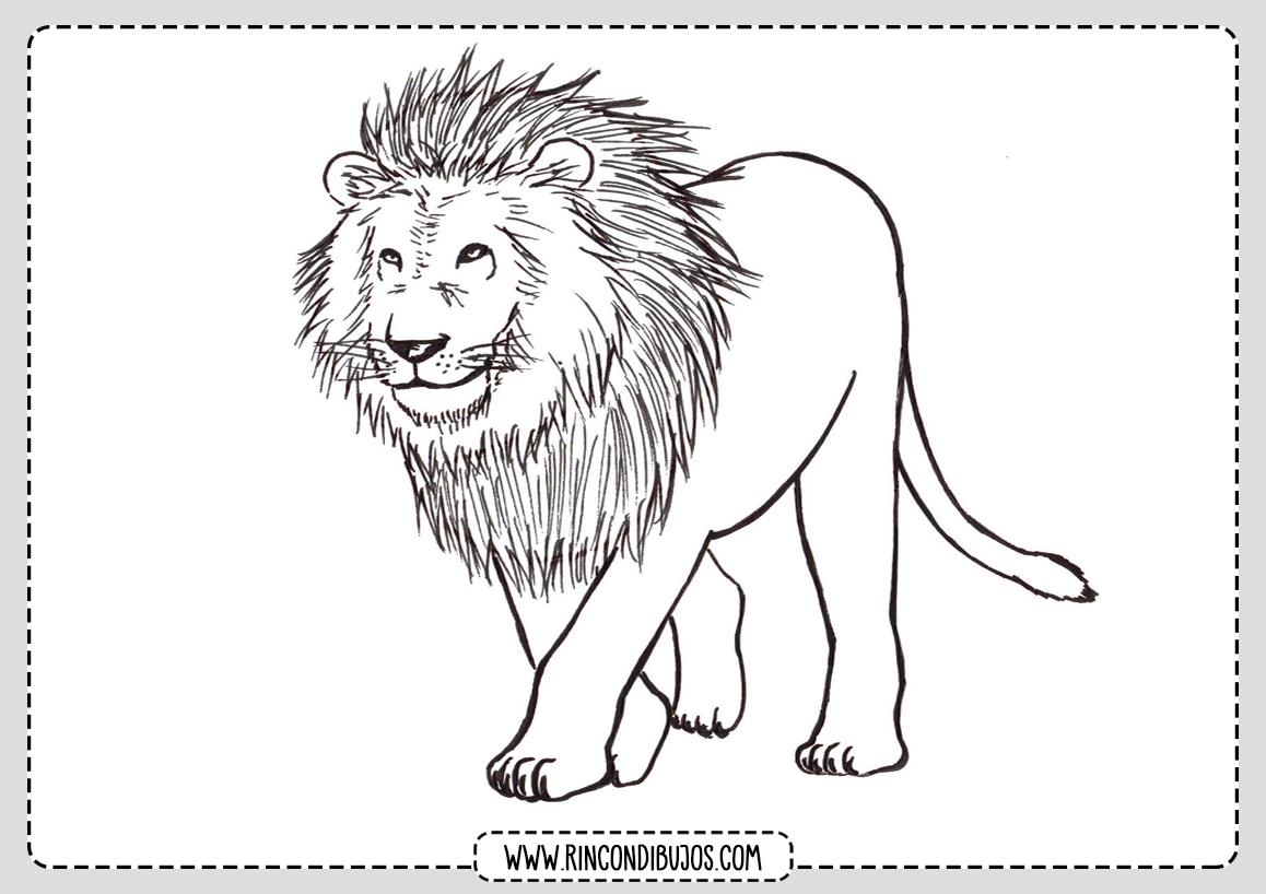 Dibujos para Colorear Leon Leones