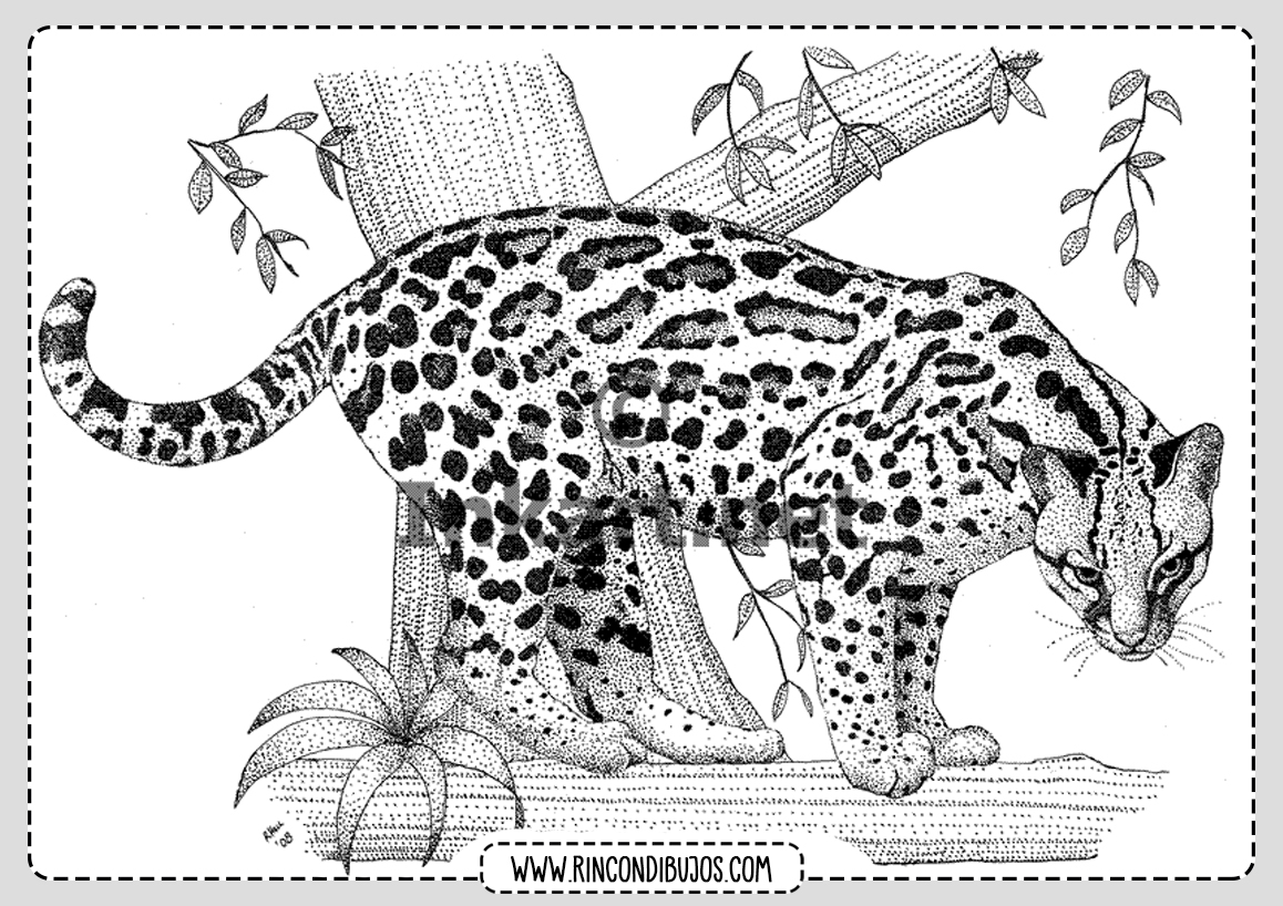 Leopardo Colorear Dibujo