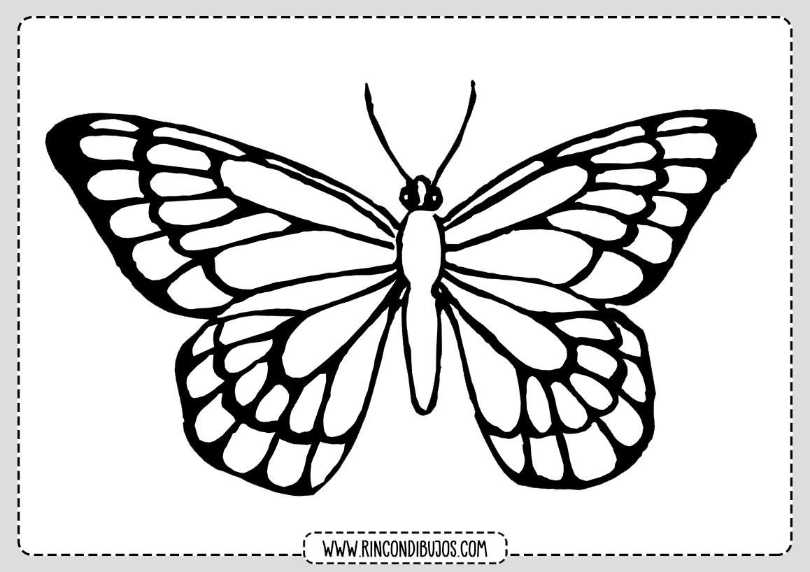 Mariposa para Colorear Dibujo