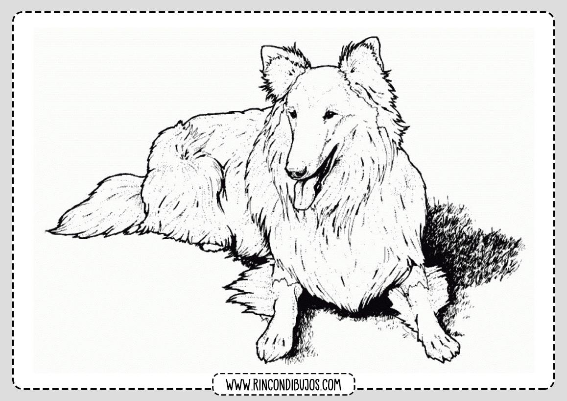 Perro para colorear dibujo imprimir