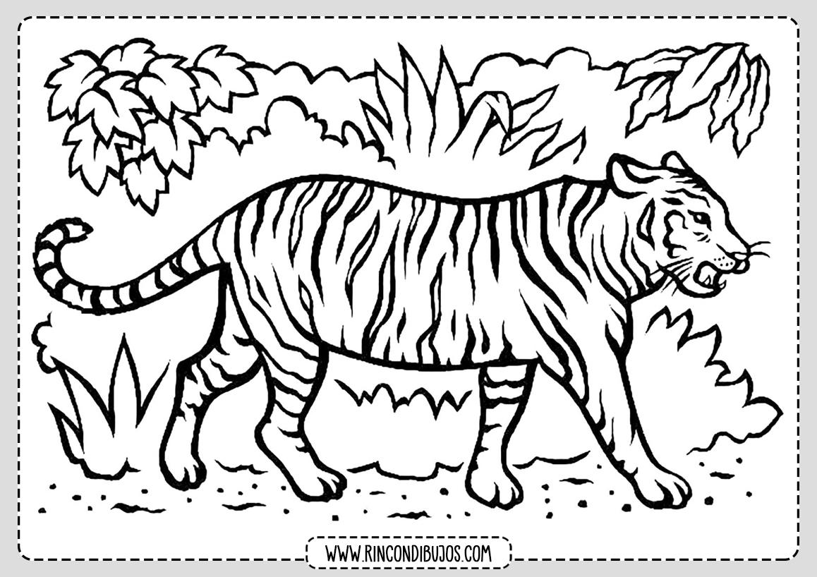 Tigre para colorear Dibujo